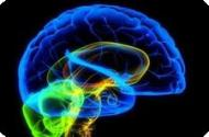 Acupuncture has a measurable effect on the brain.